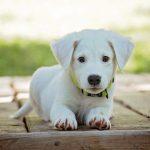 犬のクッシング症候群におすすめのサプリ